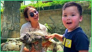 VLOG Бали | Парк Птиц и Рептилии | Кофе из Какашек