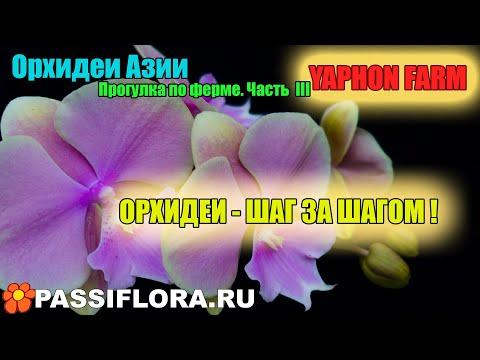 Орхидеи в деталях - Азиатские фермы!