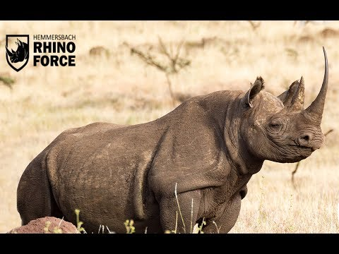 Rhino Forces Anti-Poaching and Conservation War against Rhino Extinction