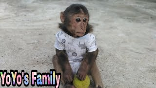 Baby Monkey |YoYo Monkey eats Fruit and plays With Mom|Family yoyo's|