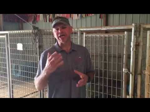 Sound Obedience Training For Gun Dogs - Building Good Habits