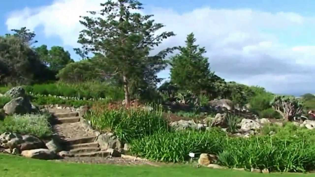 afrique du sud le jardin botanique de kirstenbosch youtube. Black Bedroom Furniture Sets. Home Design Ideas