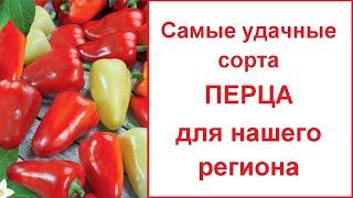 Самые удачные сорта сладкого (болгарского) перца для нашего региона