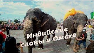 🐘Настоящие индийские слоны  на проспекте Маркса в Омске🎪