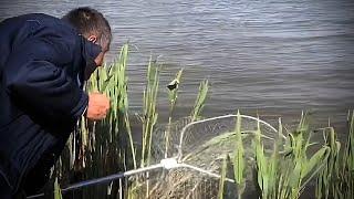 Рыбалка на закидушки с макухой в полный рост