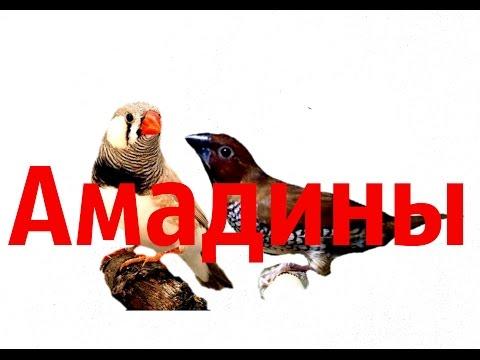 знакомство канарейки и попугая