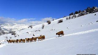 Morocco land of snow - Maroc neige - المغرب أرض الثلوج