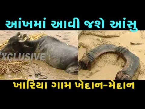 EXCLUSIVE : You will cry after watching flood hit village Khariya in Banaskantha, Gujarat