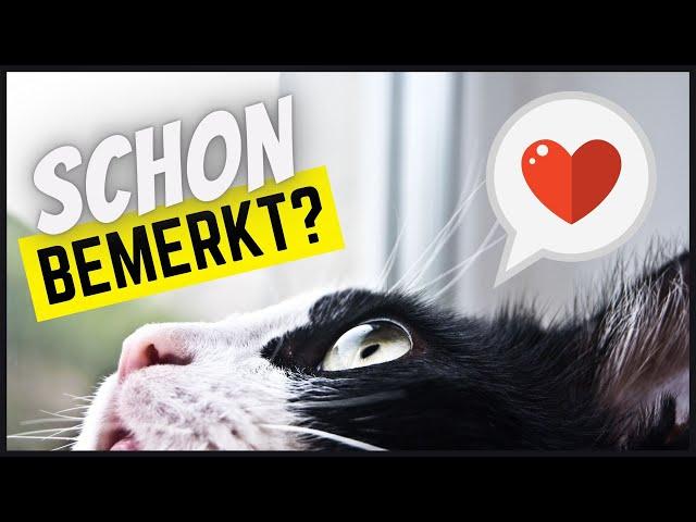5 Dinge, die deine Katze täglich FÜR DICH tut, ohne dass du es bemerkst!