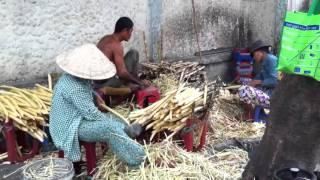 Préparation de la canne à sucre