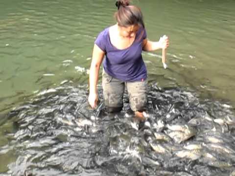 Fish Spa At Sg Moroli, Kg Luanti Baru (Ranau) - Part 2