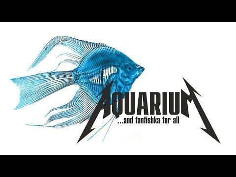 Скалярии содержание, совместимость в аквариуме видео-обзор