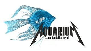 СКАЛЯРИИ - АНГЕЛЫ АКВАРИУМА: содержание, совместимость и драки скалок в аквариуме!