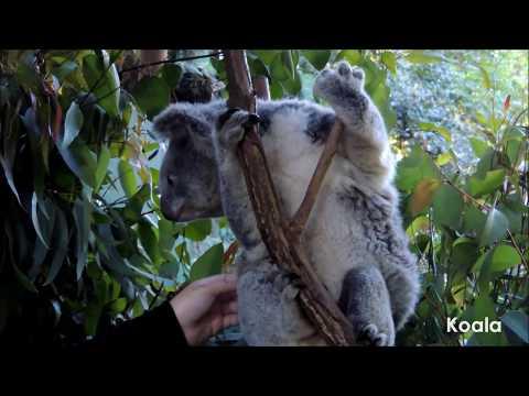 Koala Park Sanctuary, Sydney