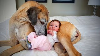 Nanny Dogs🐶👶Cute Dogs as Babysitter(Full) [Epic Life]