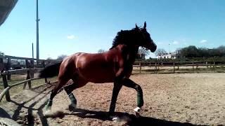 Андалузская порода лошадей. Андалусия Херез де ла Фронтера