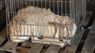 В Первомайском начата стерилизация бездомных животных