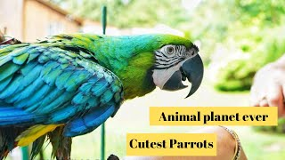 Cutest Parrots in The world 🌎 | Supper funniest pets | Animal Planet Ever #14