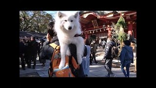 あけましておめでとうございます(^.^)/お正月、初詣に少彦名神社・西宮...