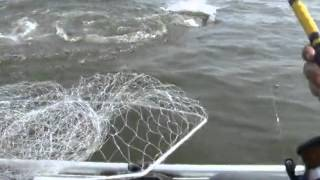 Монстр Чернобыля,рыбалка.