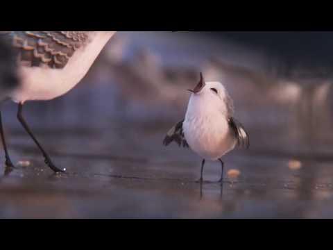PIPER Movie Clip   First Look 2016 Disney Pixar Animated Short Movie