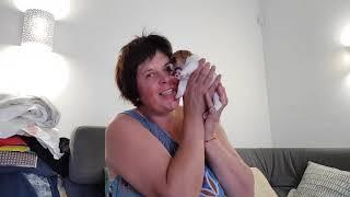 Мама решила оставить одного щенка как назвать?