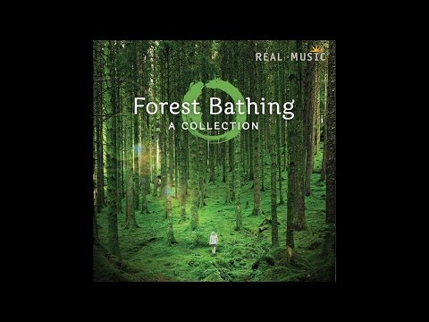 RealMusic Album Sampler: Forest Bathing by Various Artists