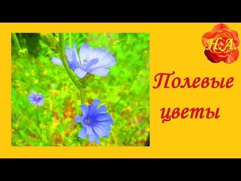 Полевые цветы Разнотравье Красота🌼