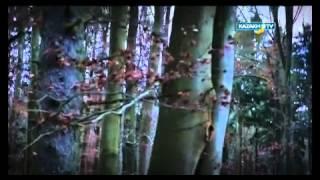Коллективная охота в Германии(, 2015-03-03T15:51:01.000Z)