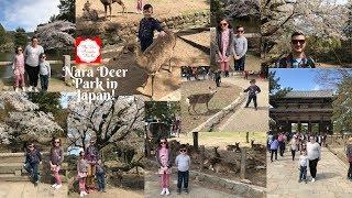 Gambar cover Nara Deer Park in Japan! (Part 1) | Cherry Blossoms!