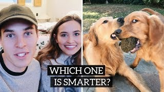 TESTING OUR DOGS INTELLIGENCE