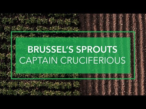 Brussel's Sprouts: Captain Of The Cruciferous