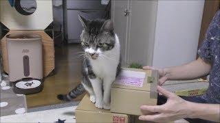 箱がいっぱいあったので積んでみました。 箱を見ると飛び乗ってくるリキ...