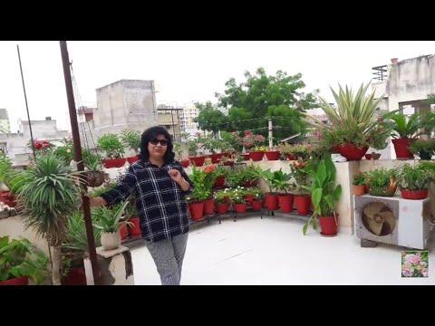 Garden Tour - Monsoon || 200K Celebration Garden Tour || Fun Gardening Garden Tour