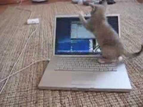 Funny cat playing with a Macbook