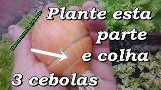 Corte e plante a parte da raiz da cebola e colha 3 cebolas, Horta thumbnail