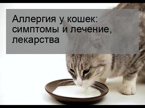 Вопрос: Почему на короткошёрстную кошку аллергия?