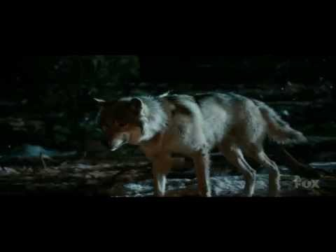 Download Evolution of dogs Explained by Neil deGrasse Tyson - Excerpt - Cosmos A space time Odyssey
