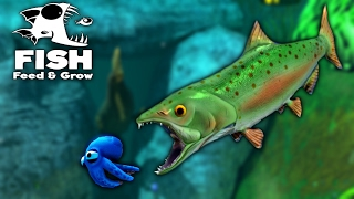 Feed and Grow Fish - NEW GIANT SALMON DRAGS BIGGEST FISH TO IT