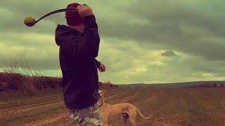 #18 My lurcher dog unlike no other