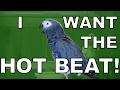 Birdstep, Davul ve Kuş Sesleri ile Müzik