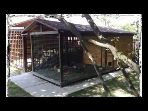 видео: Курятник на даче