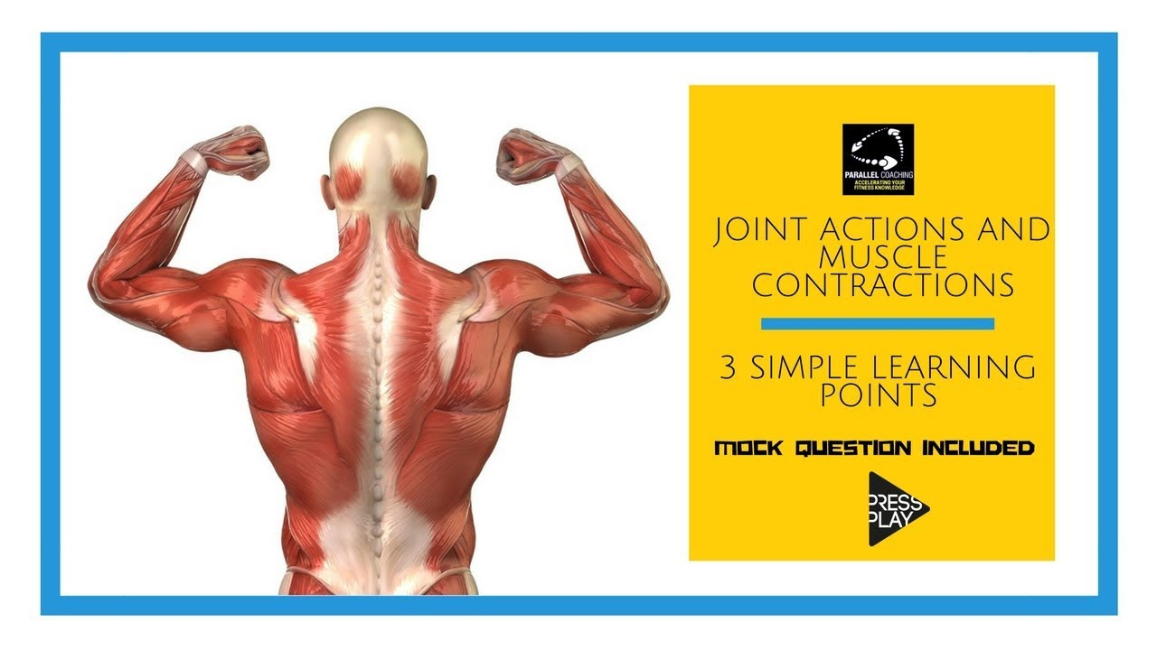 Joint Actions and Muscle Contractions in 3 simple learning points ...
