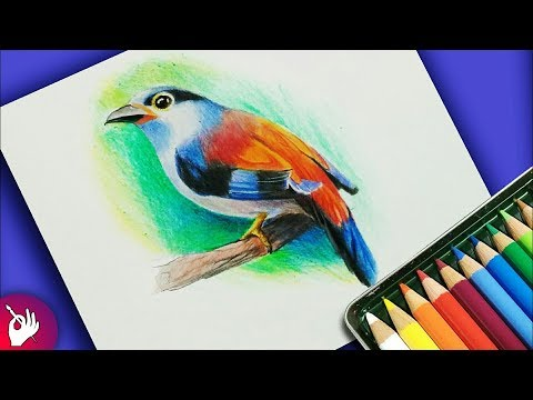 how-to-draw-bird-with-colour-pencil-step-by-step