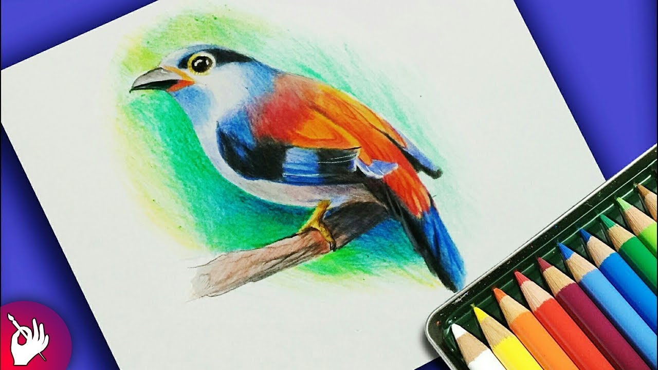 How to draw bird with colour pencil step by step - YouTube