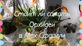 Мох Сфагнум и Орхидеи(This video is about Мох Сфагнум и Орхидеи мой новый полив, новая орхидея и что я думаю о Мхе Сфагнум в орхидеях. Так..., 2016-03-12T14:47:30.000Z)