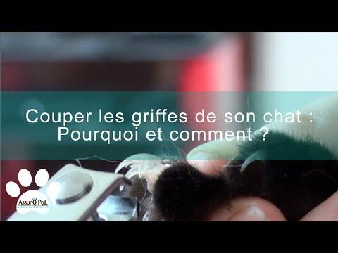 Comment Et Pourquoi Couper Les Griffes De Son Chat ? | Assur O'Poil