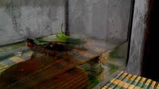 """Сериал """"Говорящая Черепаха"""" серия 4. Клип """"Виртуальная Любовь(я знаю твой телефон)"""""""