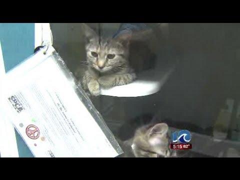 Virginia Beach SPCA Not Taking In Cats Temporarily