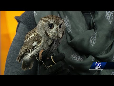Fontenelle Forest brings special visitor to KETV
